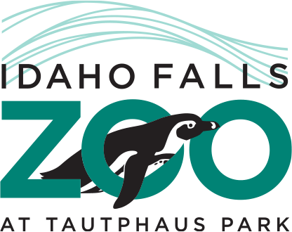 Web Marketing Campaign for Idaho Falls Zoo